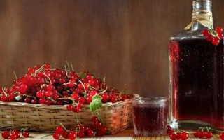 Рецепт приготовления вина из красной рябины в домашних условиях