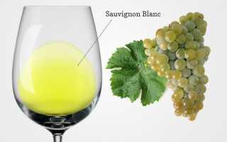 Вино из Совиньон Блан: обзор, регионы выращивания и нюансы как пить