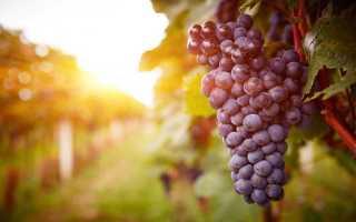 Технология производства красного полусухого вина