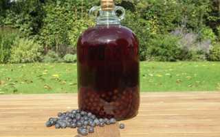 Вино из терна в домашних условиях: рецепты приготовления